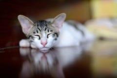 Кот спать на деревянном поле Стоковые Изображения RF