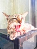 Кот спать на коробке рот открытый стоковые фотографии rf