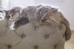 Кот спать на кресле Стоковая Фотография