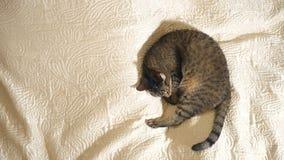 Кот спать на кровати видеоматериал