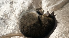 Кот спать на кровати акции видеоматериалы