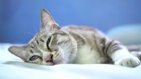 Кот спать на кровати сток-видео