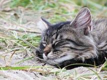 Кот спать на песке Стоковое Изображение RF
