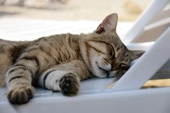 Кот спать на салоне Стоковое фото RF