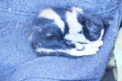Кот спать на сером цвете стула 9 Стоковые Фото