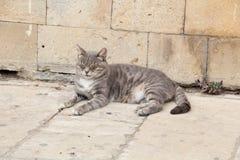 Кот спать на улице Стоковая Фотография