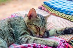 Кот спать на шарфах Стоковые Изображения RF