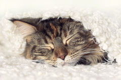 Кот спать стороны стоковые изображения rf