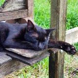 Кот спать черный стоковая фотография