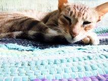 Кот спать Стоковое Фото