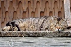 Кот #2 спать Стоковое Изображение