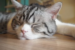 Кот спать Стоковое фото RF