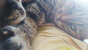 Кот спать Стоковая Фотография