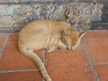 Кот спать Стоковые Фотографии RF
