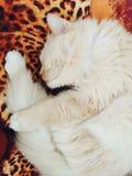 Кот спать Стоковые Фото