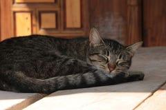 Кот спать Стоковые Изображения RF