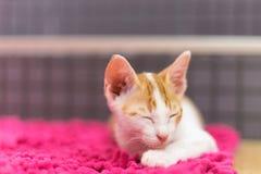 Кот спит на ковре Стоковая Фотография RF