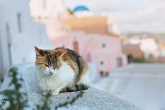 Кот спит на стене Стоковые Изображения RF