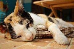 Кот спит на цементе на парке Стоковое Фото