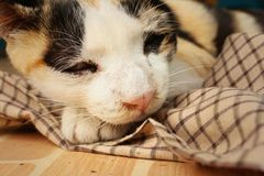 Кот спит на цементе на парке Стоковая Фотография