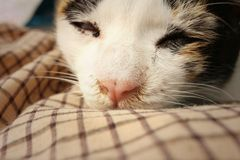 Кот спит на цементе на парке Стоковое фото RF