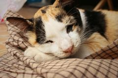Кот спит на цементе на парке Стоковая Фотография RF
