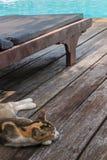 Кот спит около lounger poolside стоковое изображение rf