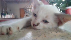 Кот спит Стоковые Фото