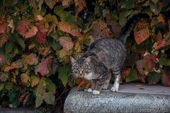 Кот среди листвы Стоковая Фотография RF