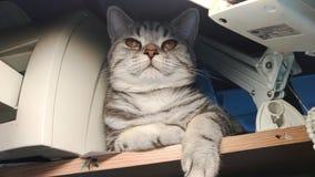 Кот среди конторских машин стоковые фотографии rf