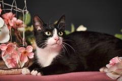 Кот среди цветков Стоковое Изображение