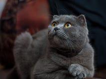 кот старый Стоковое Изображение