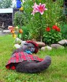 Кот створки Scottish в национальном костюме Стоковое Изображение