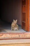Кот стоя на двери Стоковая Фотография RF