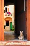 Кот стоя на двери Стоковые Изображения RF