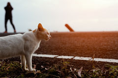 Кот стоя около дороги Стоковые Фото
