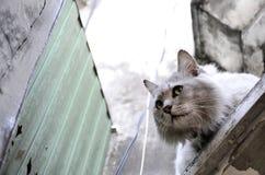 Кот страха стоковое фото