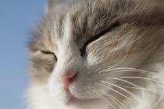 кот счастливый Стоковое фото RF