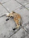 Кот счастливый Стоковые Изображения