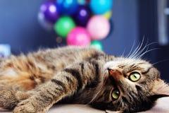 Кот с баллонами Стоковые Фотографии RF