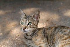 Кот с большими зелеными глазами Стоковое Изображение RF