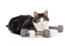 Кот с гантелями Стоковое Изображение RF