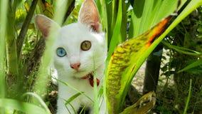 Кот с 2 глазами цвета голубыми и желтыми в заросли стоковое изображение