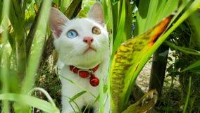 Кот с 2 глазами цвета голубыми и желтыми в заросли стоковые изображения rf