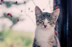 Кот с закрытыми глазами Стоковое Фото