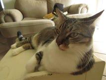 Кот с зелеными глазами в таблице стоковая фотография rf