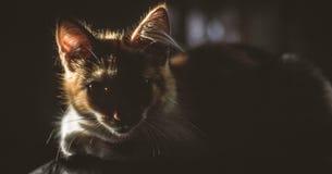 Кот с интенсивным взглядом в солнечном свете стоковые фото