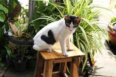 Кот с картиной сердца Стоковые Изображения RF