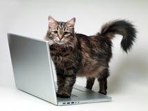 Кот с компьтер-книжкой Стоковая Фотография RF