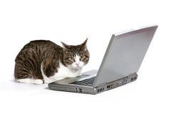 Кот с компьтер-книжкой Стоковые Фото